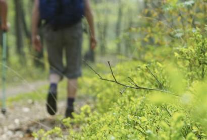 Erholung zu Fuß: Neue Übersichtskarte für Wandertouren in der Region beim Münsterland e.V. erschienen