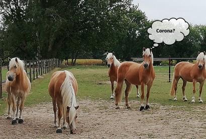 Aktualisiert: Informationsquellen und Hilfestellungen zum Corona-Virus für Pferdebetriebe