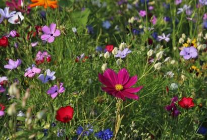 Tag der Gärten & Parks 2020 abgesagt