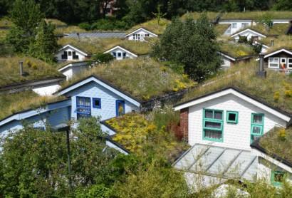 """Online-Veranstaltung """"Klimaanpassung durch Dachbegrünung"""" am 26. August"""
